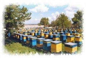 пчеловодство, пчелы, пасека